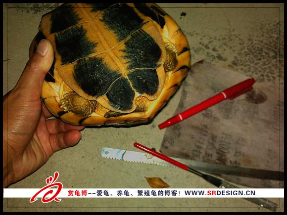 乌龟手术准备的工具