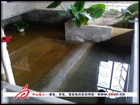 砖墙养龟池建设